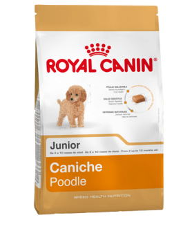 Royal Canin Poodle/Caniche Cachorro